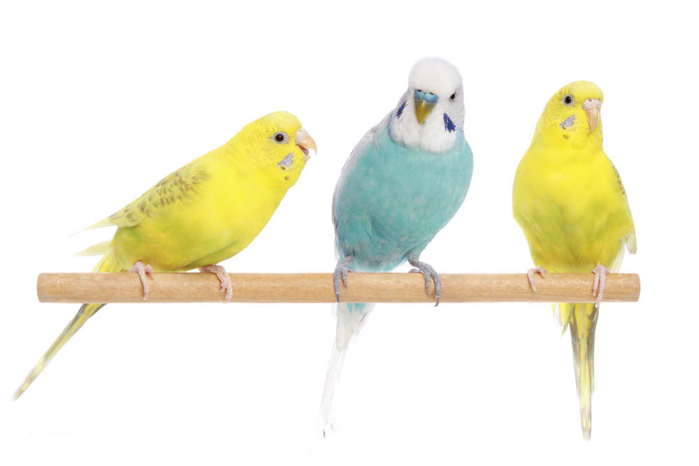 3 Mobile Vet Services to Keep Your Avian Family Members Healthy and Happy